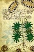 Voynich-1