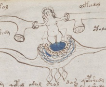 Voynich Manuscript Bathtub Example 77V Cropped