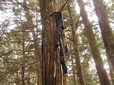 Aokigahara Suicide Forest 6