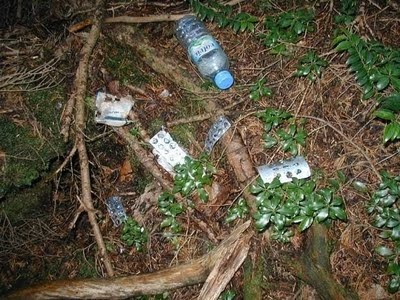 Aokigahara Suicide Forest 8