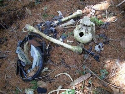 Aokigahara Suicide Forest 9